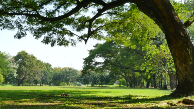 big tree and green yard in green park - coiled spring stock videos and b-roll footage