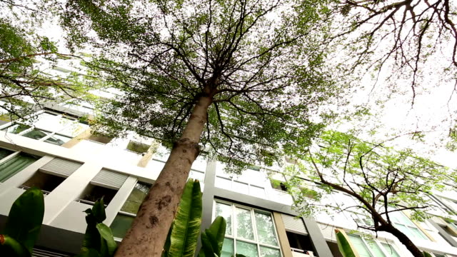 big tree in the city - injecting stock videos and b-roll footage