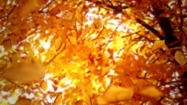 stockvideo's en b-roll-footage met big tree losing leaves loop - herfst