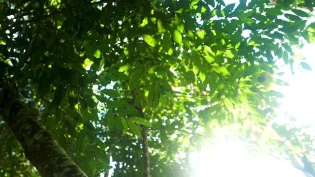 big tree nature - beech tree stock videos and b-roll footage