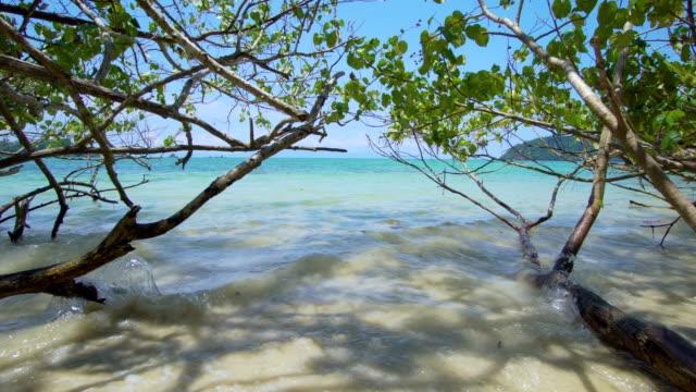 big tree over beach sea - polarizer stock videos & royalty-free footage