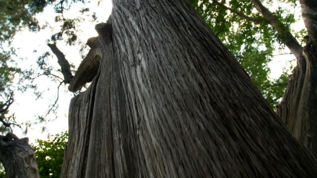 big tree trunk - tree trunk stock videos & royalty-free footage