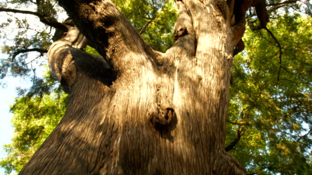 big tree trunk - tree trunk stock videos & royalty-free footage