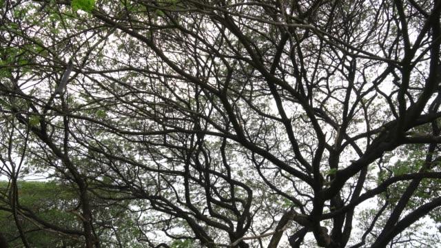 緑豊かな公園には大きな木 - 最大点の映像素材/bロール