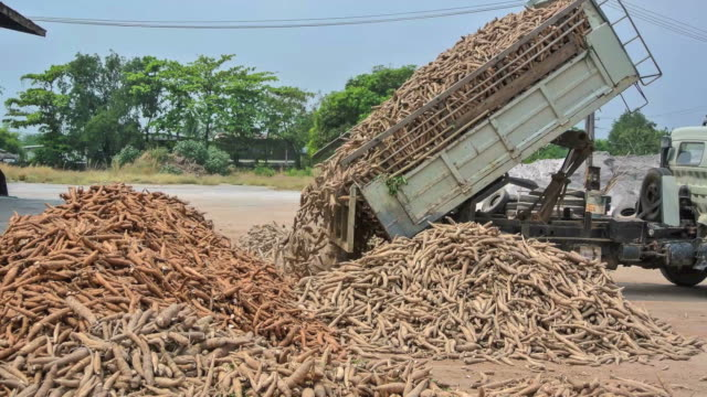 big truck pouring plants to ground - dump truck stock videos & royalty-free footage