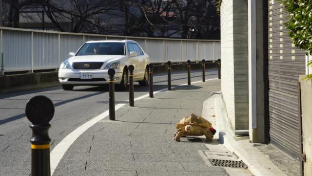 big turtle takes a walk on sidewalk along the kandagawa (kanda river) at sekiguchi bunkyo ward tokyo japan on feb.03 2019. - poetry stock videos & royalty-free footage