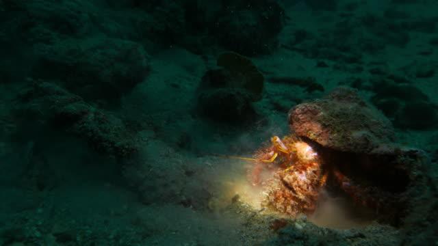 Big undersea Hermit Crab