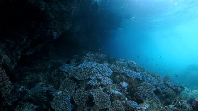 Big underwater cliff with sunlight
