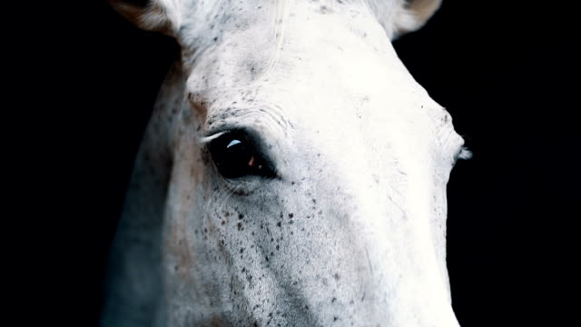 big white horse eating in a barn - horse stock videos & royalty-free footage