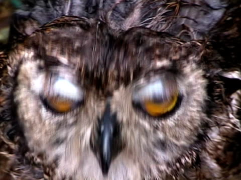 stockvideo's en b-roll-footage met big yellow owl eyes - surprise