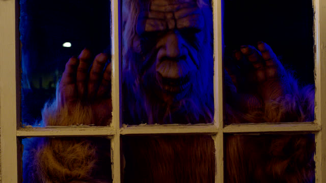 bigfoot nella finestra - bigfoot video stock e b–roll