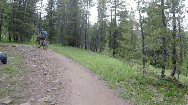 bike rider pov - pinaceae stock videos & royalty-free footage