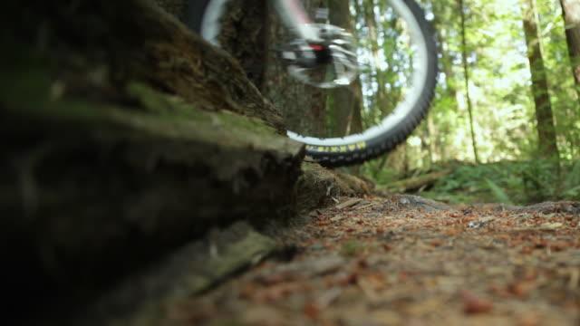 ms biker mountain biking through forest / squamish, british columbia, canada - squamish stock videos & royalty-free footage