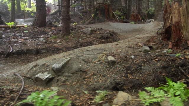 ws bmx bikers riding through woods / california, usa - 曲線点の映像素材/bロール