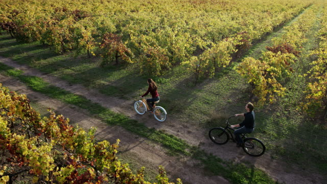 biking in napa valley vineyards - tripping falling stock videos and b-roll footage