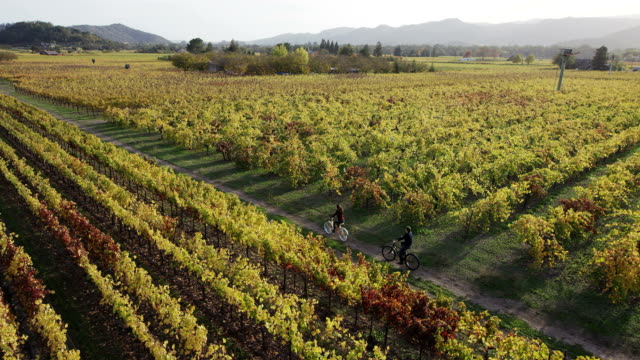 biking in vineyards - winemaking stock videos & royalty-free footage