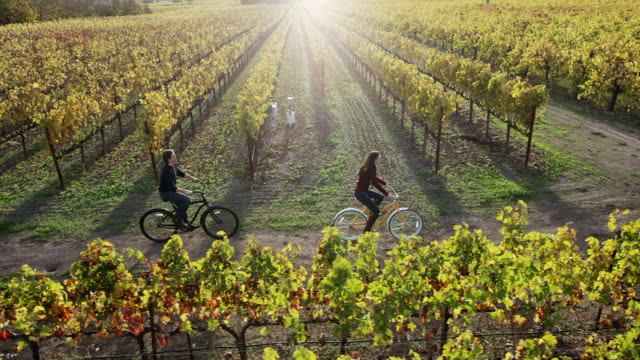 biking in vineyards - vineyard stock videos & royalty-free footage