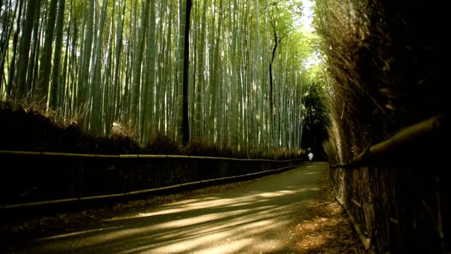 biking through a bamboo forest - satoyama scenery stock videos & royalty-free footage