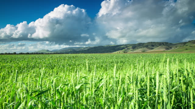 Billowing Clouds over Field of Wheat - Motion Control Timelapse