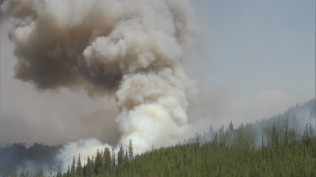 Billowing smoke from forest fire, Yellowstone, USA