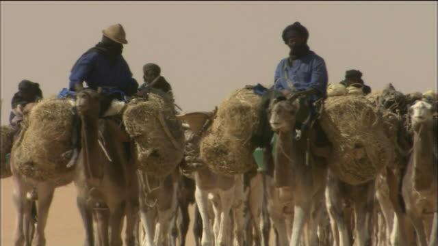 Bilma Oasis In Sahara Desert