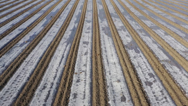 stockvideo's en b-roll-footage met biodegradeable polyester sheeting covers a maize crop on may 16 2020 in rhyl wales agricultural operations in the uk have been able to continue work... - polyester