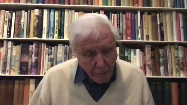 sir david attenborough interview on dasgupta review; england: london: int sir david attenborough 2-way interview from unidentified location sot - ecosystem stock videos & royalty-free footage