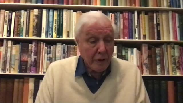 sir david attenborough interview on dasgupta review; england: london: int sir david attenborough 2-way interview from unidentified location sot -... - ecosystem stock videos & royalty-free footage