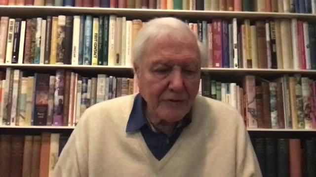 sir david attenborough interview on dasgupta review; england: london: int sir david attenborough 2-way interview sot - re death of captain sir tom... - ecosystem stock videos & royalty-free footage