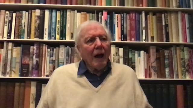 sir david attenborough interview on dasgupta review; england: london: int sir david attenborough 2-way interview continued sot - re coronavirus and... - ecosystem stock videos & royalty-free footage