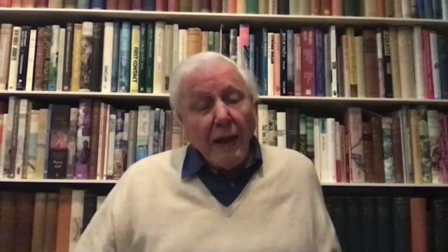 sir david attenborough interview on dasgupta review; england: london: int sir david attenborough 2-way interview from unidentified location sot - re... - ecosystem stock videos & royalty-free footage