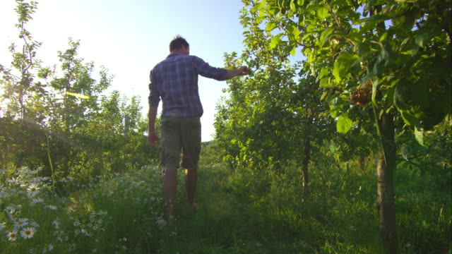 biodynamic farming - apple fruit stock videos and b-roll footage