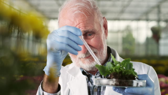 Biologist at greenhouse