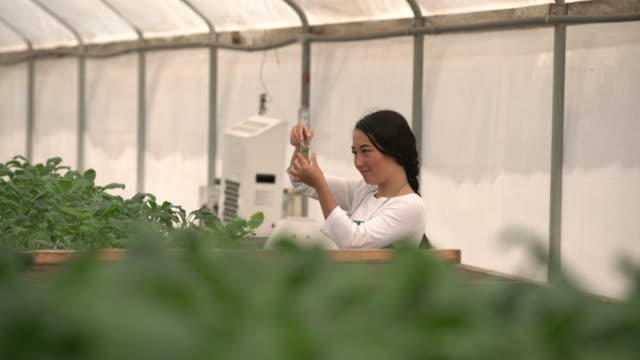 MS biologist doing research in a greenhouse