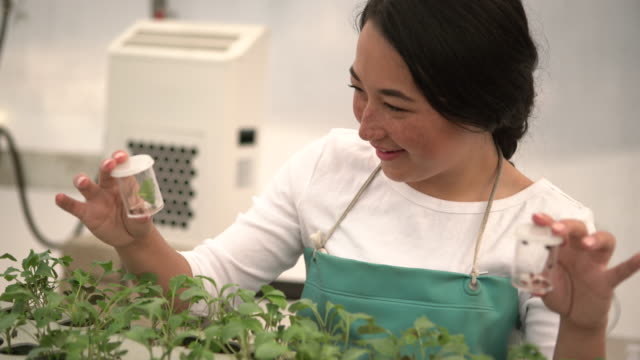 ms biologist looking at ladybugs in a agriculture lab - vanguardians stock videos & royalty-free footage
