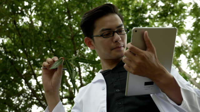 Biologist using digital tablet to analyze herb in the forest park