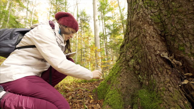 Biologist using digital tablet to analyze moss in the forest.