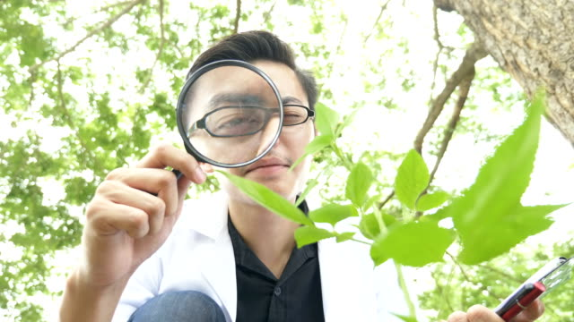 Biologist using magnifying glass to analyze plants in the forest park