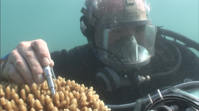 a biologist works underwater to perform research on a coral formation. - scientist stock videos & royalty-free footage