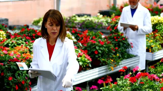 花の温室で働いている生物学者。 - ゼラニウム点の映像素材/bロール