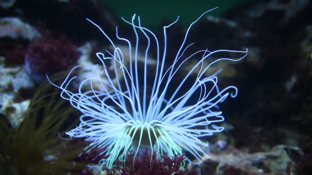 bioluminescent deepsea anemone - sea anemone stock videos & royalty-free footage