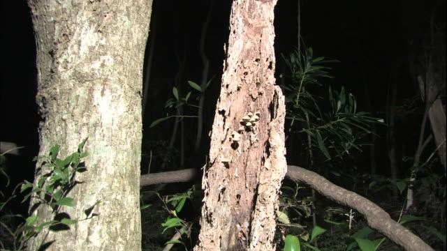 Bioluminescent mushrooms glow on a tree trunk.