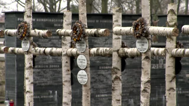 "birch crosses on the graves of scout battalion ""zoska"" - ceppaia video stock e b–roll"