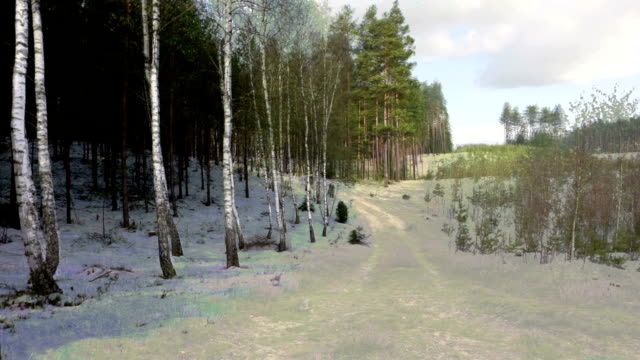 birch tree -four seasons - le quattro stagioni video stock e b–roll