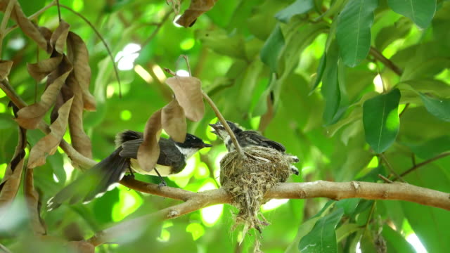 bird and bird's nest - animal nest stock videos and b-roll footage