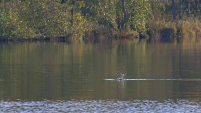 vidéos et rushes de bird and lake - vincent pommeyrol
