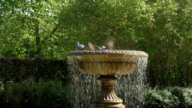 bird bath in london regent's park avenue gardens - colomba video stock e b–roll