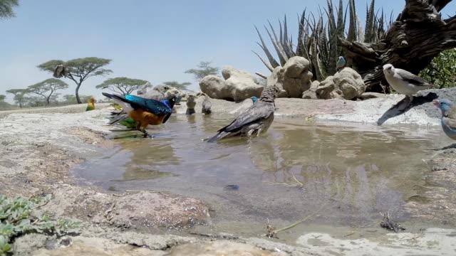 vídeos y material grabado en eventos de stock de pájaro el baño - baño para pájaros
