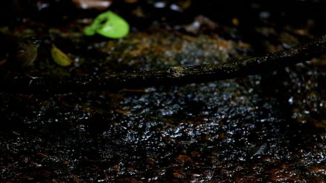 vídeos y material grabado en eventos de stock de pájaro bañándose en corriente con gotas de agua en el bosque - baño para pájaros