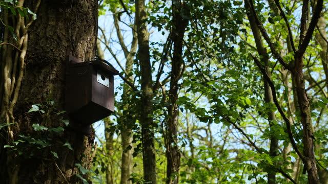 bird box on tree in leafy woodland - dappled light stock videos and b-roll footage